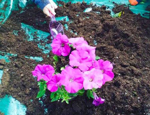 Δραστηριότητα: Κηπουρική